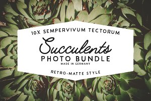 Succulents - Photo Bundle