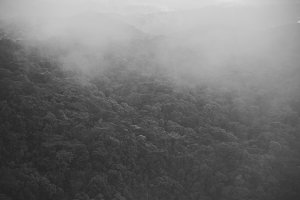 Fog over tropical jungle