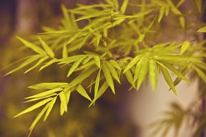 Colorful bamboo leaves