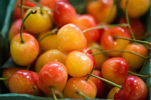 Glowing Rainier cherries
