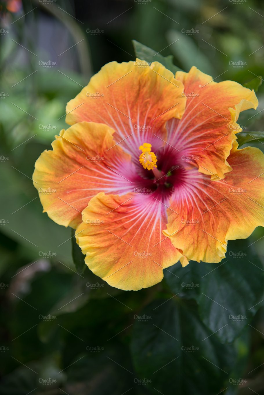 Tropical hibiscus flower nature photos creative market tropical hibiscus flower nature izmirmasajfo