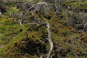 Landscape in Wilsons Promontory