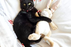 Black cat hugging stuffed animal