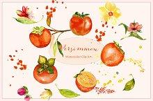Orange Persimmon. Watercolor Clipart