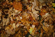 design background with autumn leaves