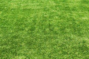 Field green grass background. Select