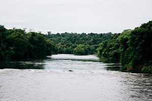Jungle River 2
