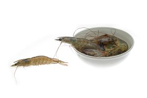 fresh raw shrimps 5.jpg