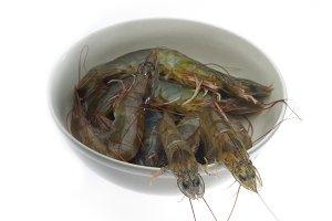 fresh raw shrimps 3.jpg