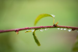 Little raindrops on a tree branch