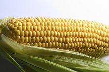 corn ..jpg