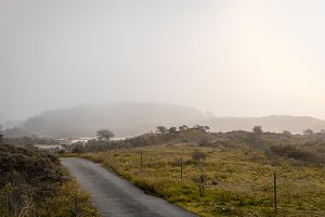 Road in the Foggy Dunes