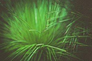 iseeyouphoto vintage kewgreen