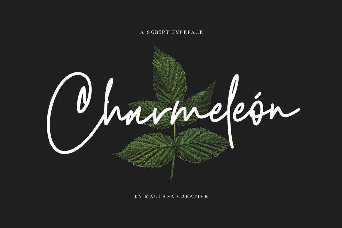 Charmeleon Script Typeface