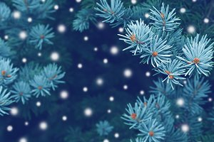 Blue spruce christmas background