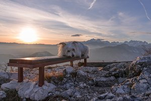 Small white dog at sunset