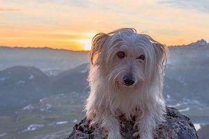 Small white dog at sunset