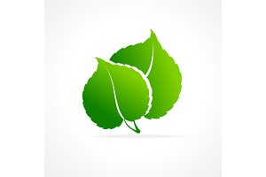 Ecology Concept of Green Leaf.