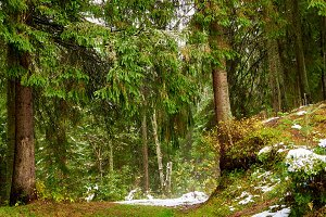 Green Glade in winter forest