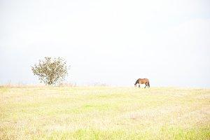 Horse. High key.
