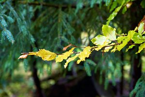 Autumn tree branch with leaves