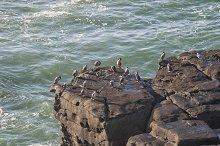 Cormorants standing on cliffs