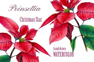 Watrcolor Poinsettia. Christmas star