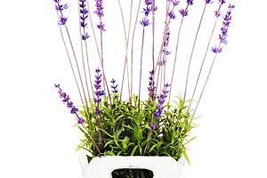 Composition of artificial garden flo