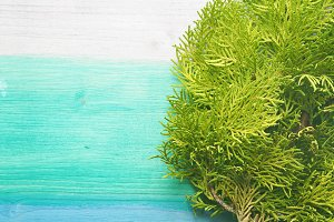 Pastel background with thuja branch