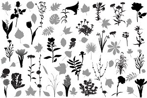 66 silhouettes of flowers and leaves