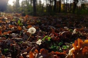 The Last Autumn Day