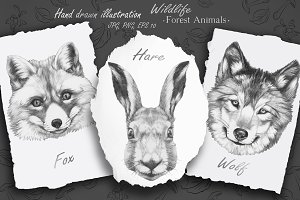 Wildlife / Forest Animals