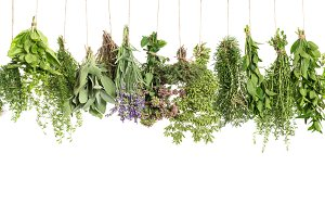 Herbs hanging isolated on white