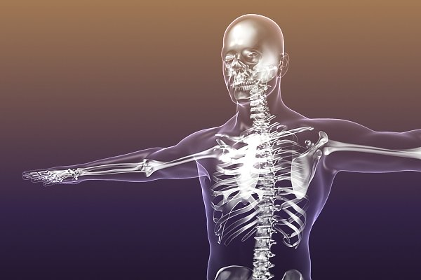 3D Characters - Human Skeleton in Body (X-Ray)