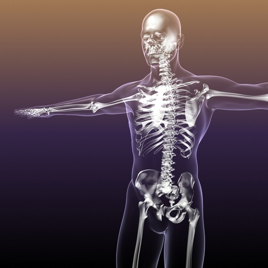 Human Skeleton In Body X Ray People Models Creative Market