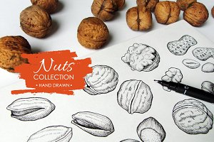 Nuts Set. Hand Drawn Illustrations