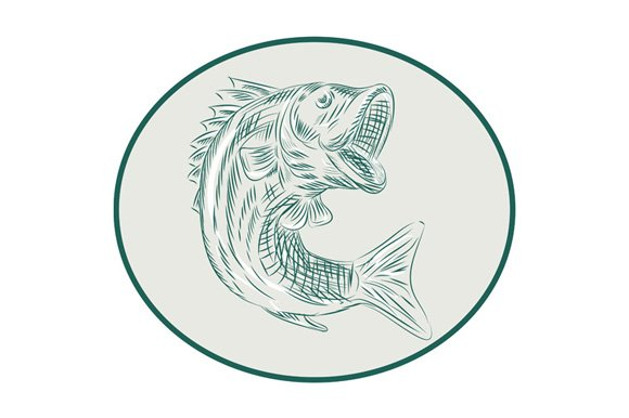 Largemouth Bass Fish Oval Etching Illustrations Creative Market