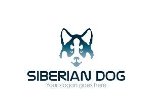 Siberian dog