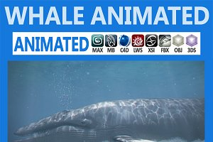 Animated Whale