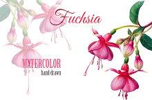 Fuchsia watercolor flower