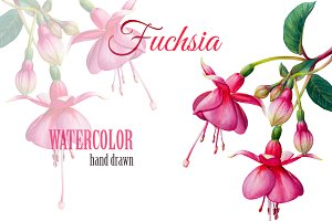 Fuchsia watercolor flower