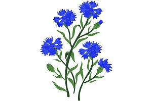Branch of blue cornflowers
