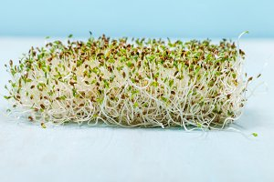Alfalfa sprouts close up