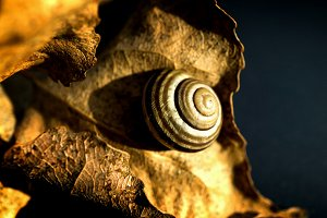 Snail on a the leaf background