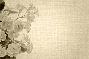 Kalanchoe flowers retro background