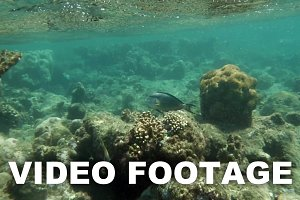 Coral Reef By the Water Surface