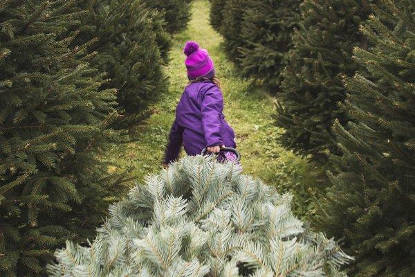 Girl on Christmas Tree Farm