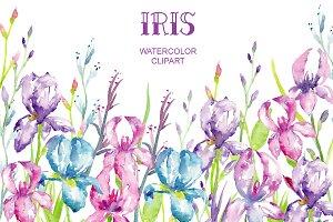 Watercolor Iris Clipart