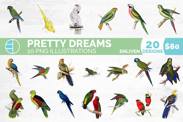 Parrot Clipart Pre Designed Photoshop Graphics Creative Market