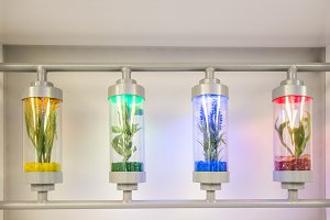 Plants grown in test tubes